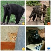 broken cats telegram meme stickers